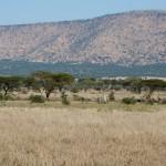 Central Serengetii